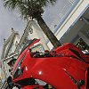 Red_palm