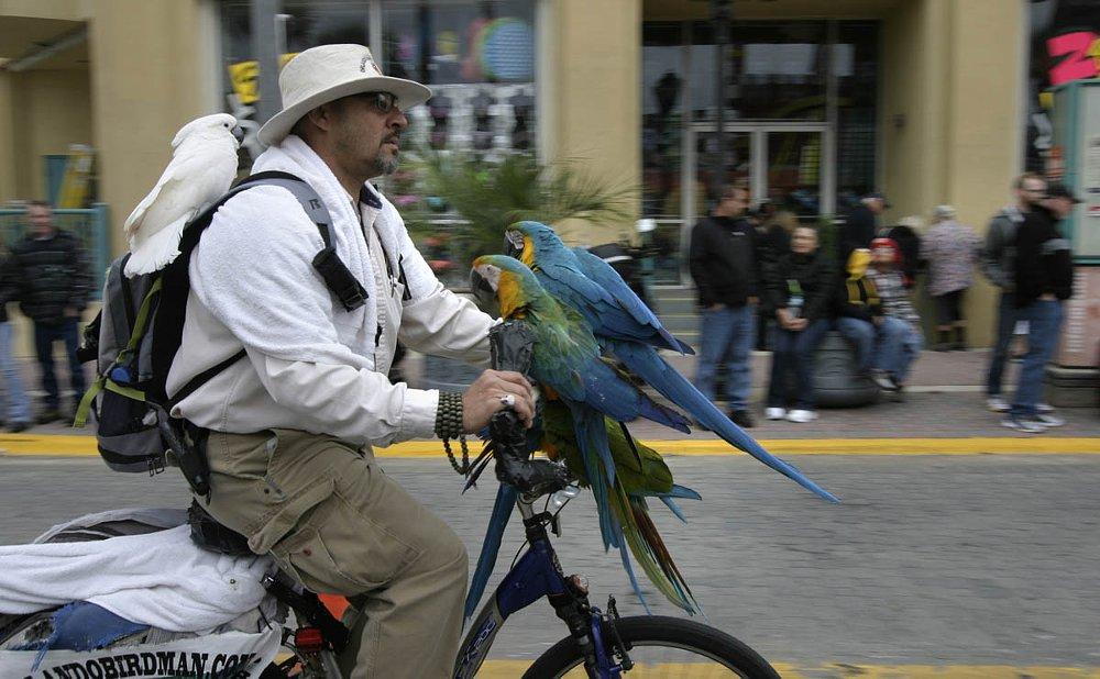 bicyclist with parrots