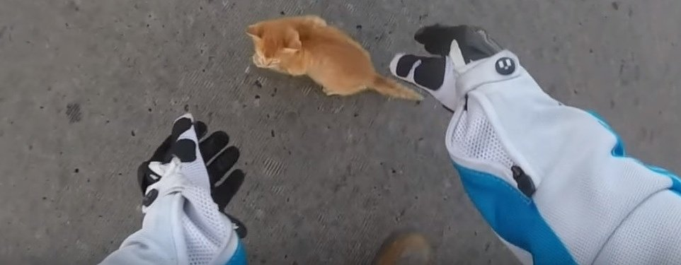Motorcyclist saves kitten, we are powerless to resist