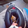 Cat_helmet_pic