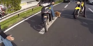Dog_on_highway_video