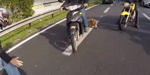 Dog_on_highway_video