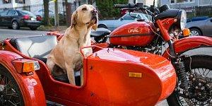 Dog_and_ural