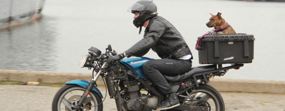 The Do-it-all  1 000 Motorcycle