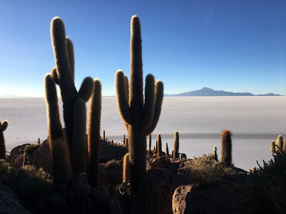Cactus Island in the Salar de Uyuni