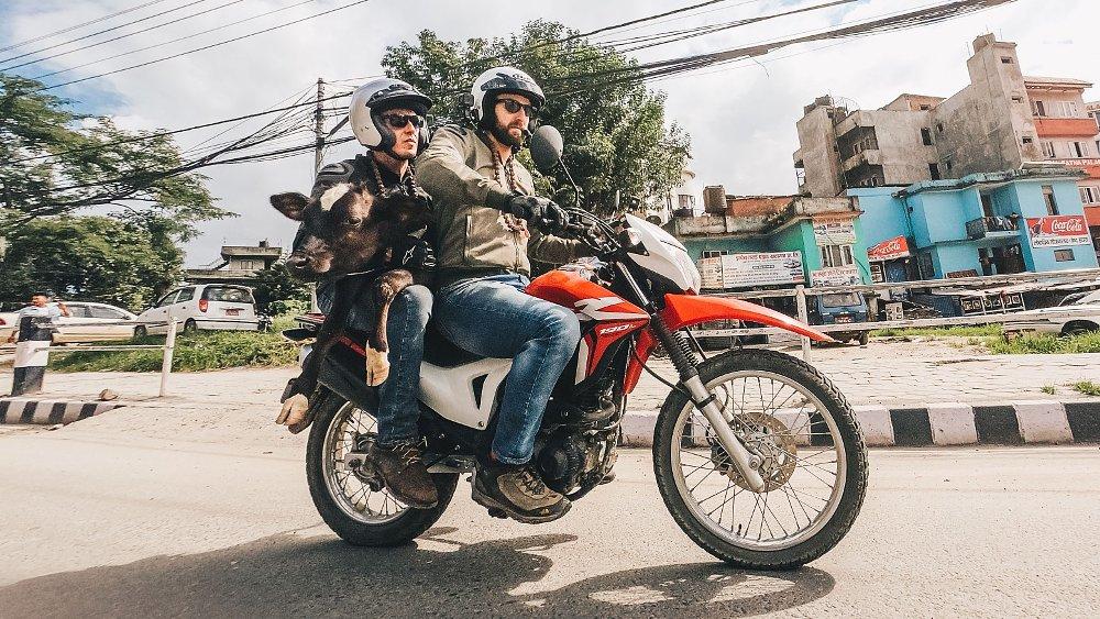"Cows on bikes: Helping Nepal's ""Bovine Biker"" do holy work"