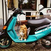 scooter dog in Amsterdam