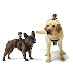 GoPro Fetch Dog Mount